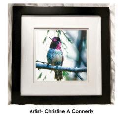 christine-a-connerly-hummingbird-frame