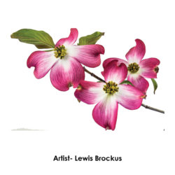 lewis-brockus-flowers-frame